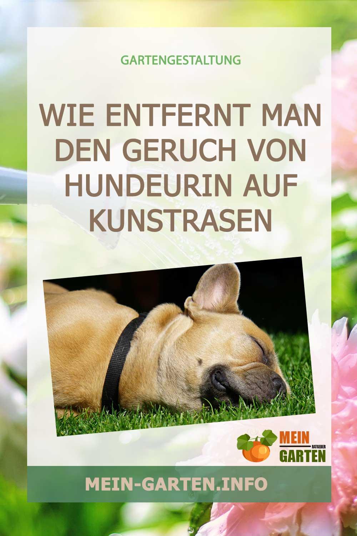 Wie entfernt man den Geruch von Hundeurin auf Kunstrasen