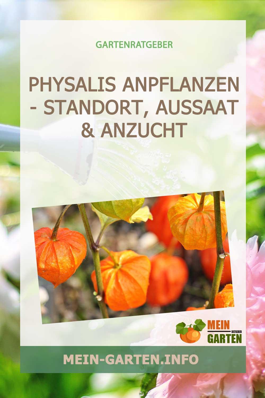 Physalis anpflanzen – Standort, Aussaat & Anzucht