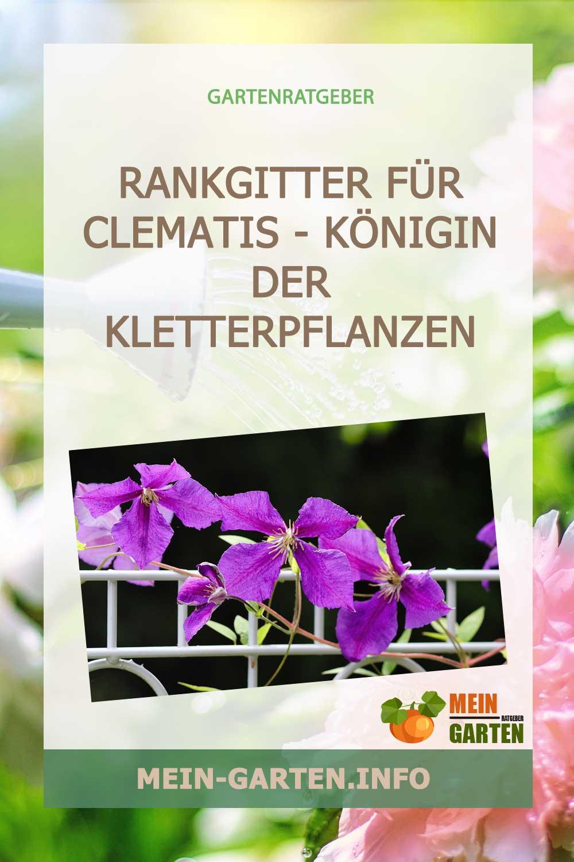 Rankgitter für Clematis – Königin der Kletterpflanzen