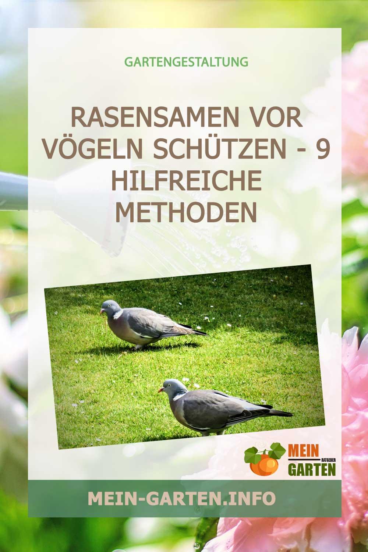 Rasensamen vor Vögeln schützen – 9 hilfreiche Methoden