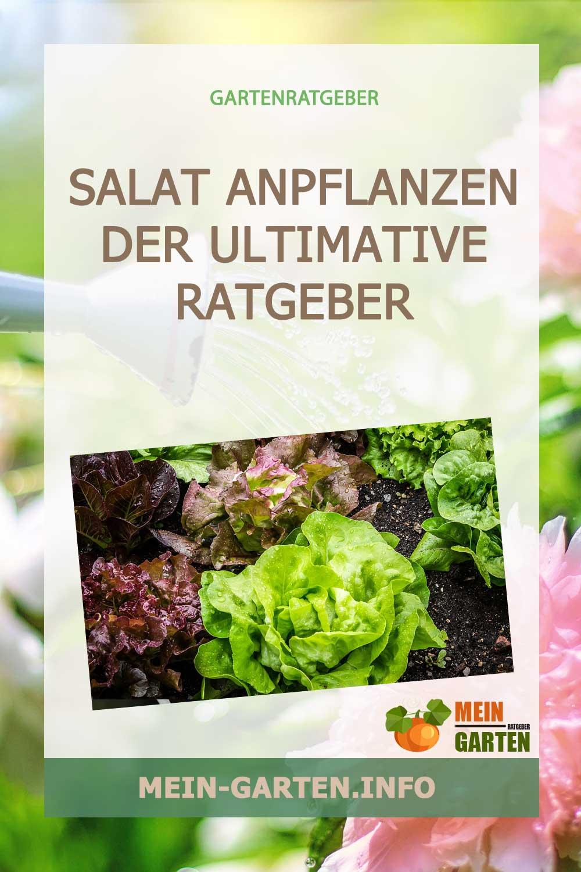 Salat anpflanzen – Von der Aussaat, Pflege bis zur Ernte
