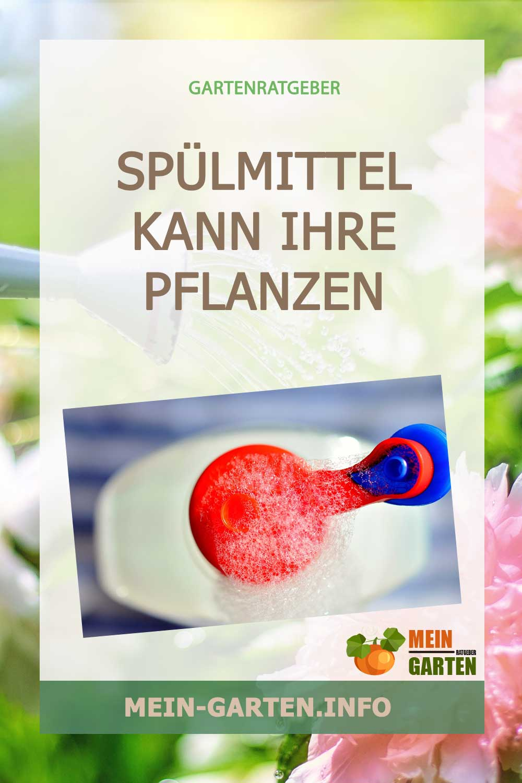 Spülmittel kann Ihre Pflanzen schädigen