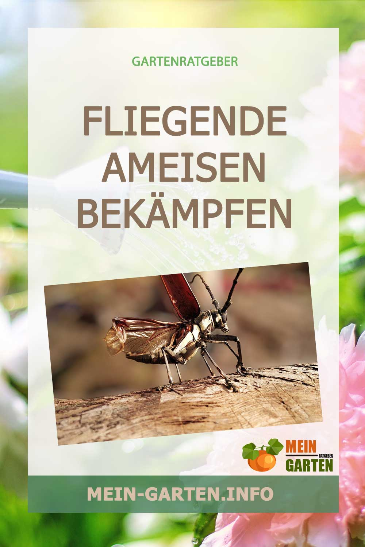 Fliegende Ameisen bekämpfen – Was können Sie jetzt tun