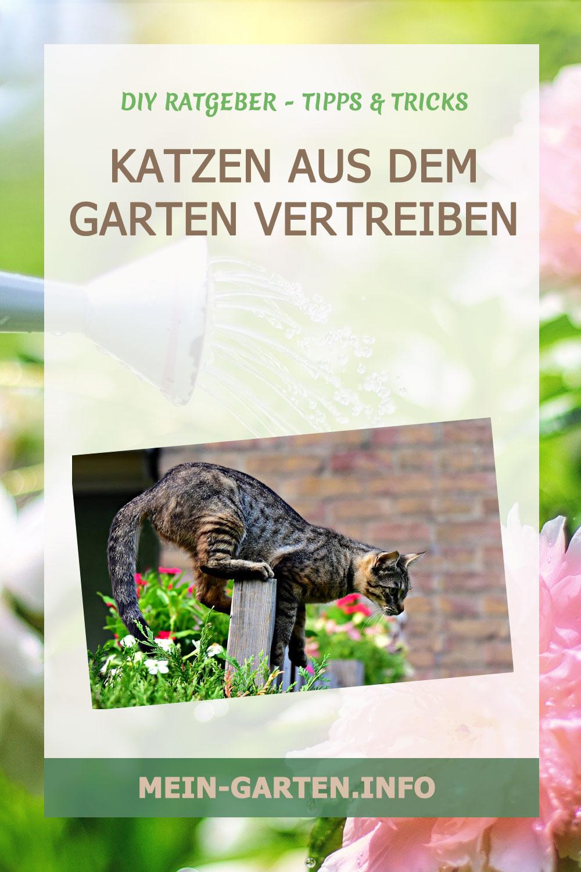 Katzen aus dem Garten vertreiben