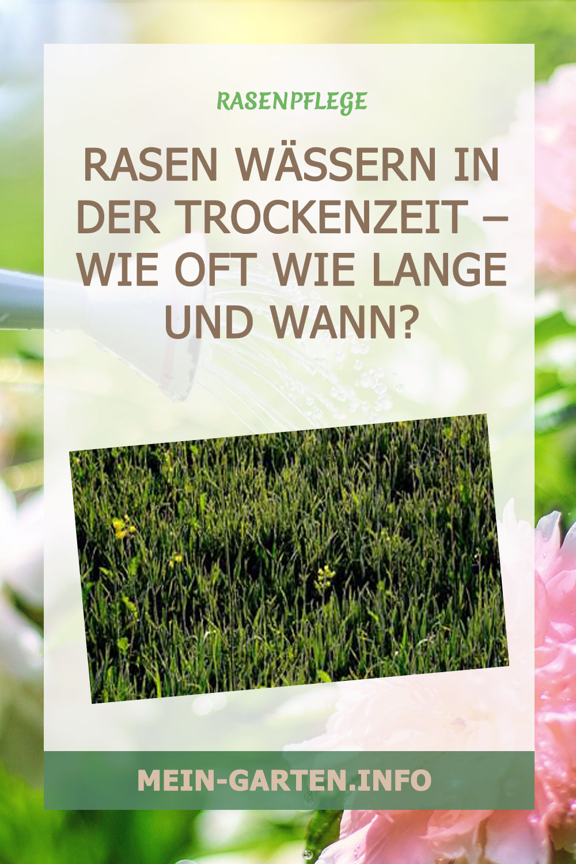 Rasen wässern in der Trockenzeit –  Wie oft Wie Lange und Wann?