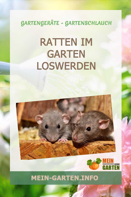 Ratten im Garten – Das können Sie dagegen tun.