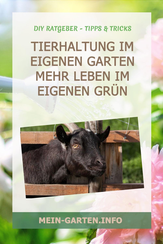 Tierhaltung im eigenen Garten   Mehr Leben im eigenen Grün