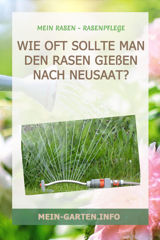 Wie oft sollte man den Rasen gießen nach Neusaat?